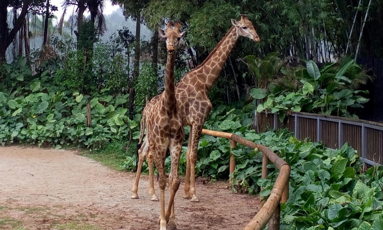 广州长隆野生动物世界一日游