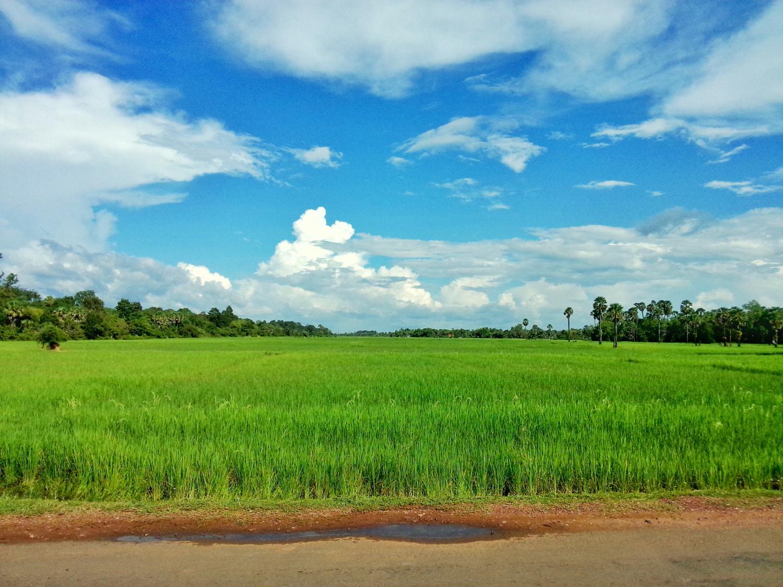乡间小路,蓝天白云,绿油油的稻田,感觉像是小学课本里的.