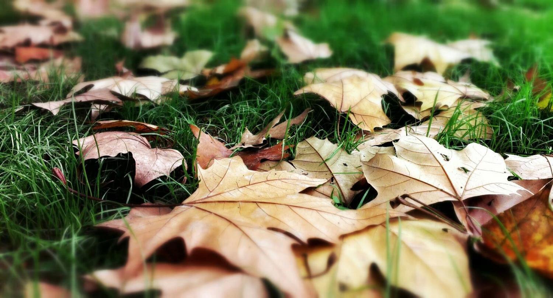 pixlr-摄影天地